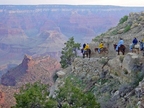 Adventure Honeymoons - Grand Canyon Mule Ride