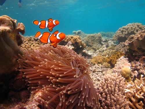 Adventure Honeymoons - Great Barrier Reef of Australia